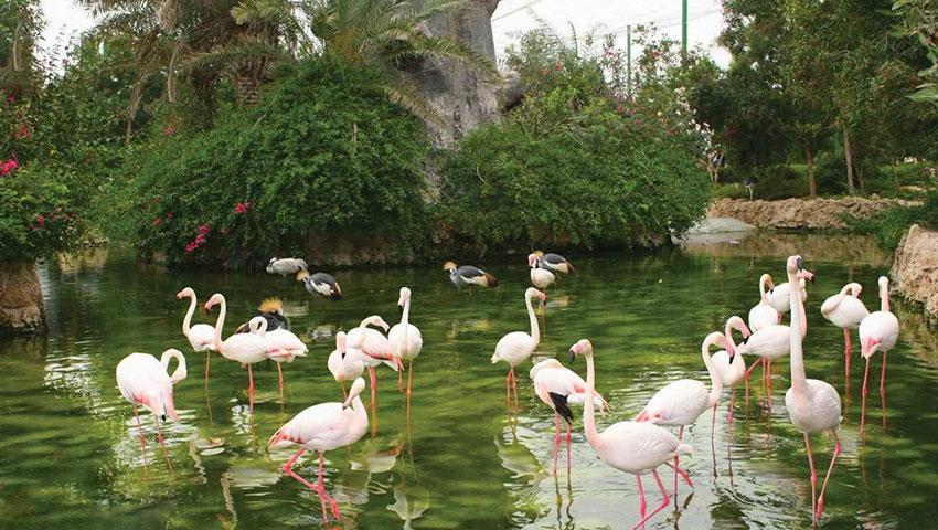 باغ پرندگان مشهد در مجموعه گردشگری سپاد مشهد