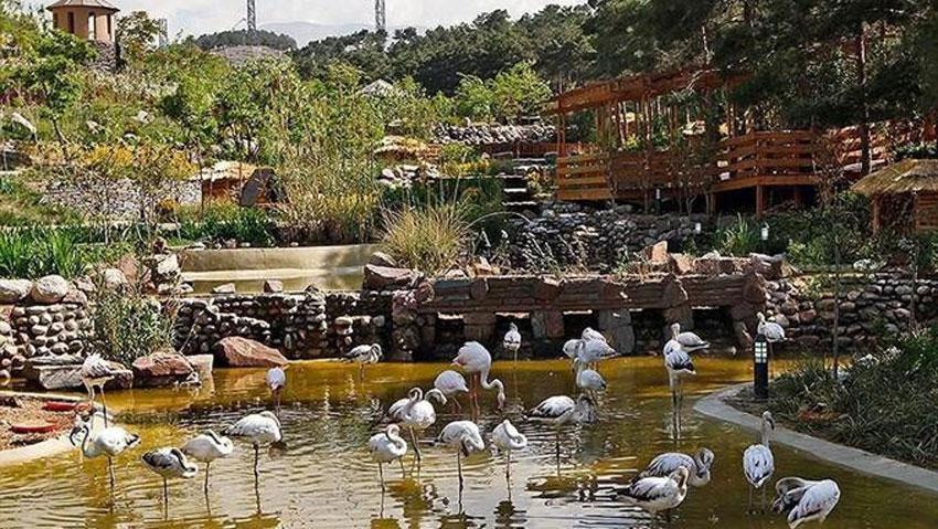 قیمت یلیط ورودی باغ پرندگان مشهد