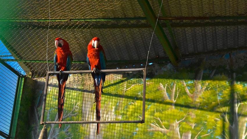 ساعات بازدید از باغ پرندگان مشهد