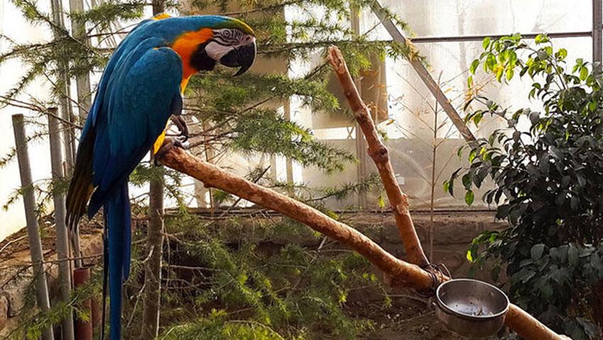 تصویر طوطی در باغ پرندگان مشهد