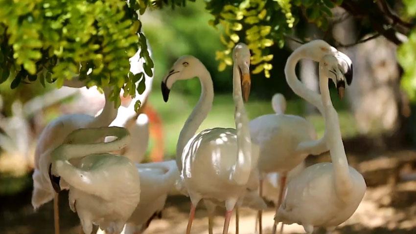 بازدید از باغ پرندگان مشهد