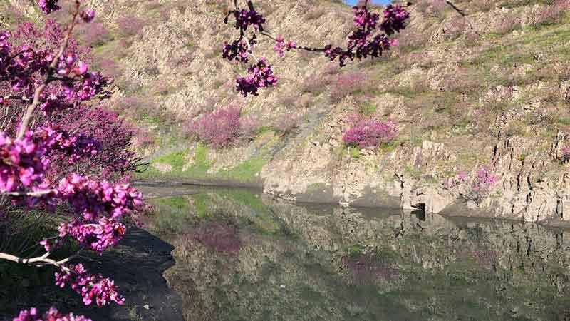 زیبایی های دره ارغوان مشهد