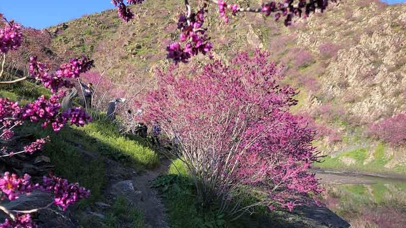 دره ارغوان طرقبه مشهد