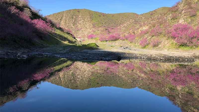 دره ارغوان در فصل بهار