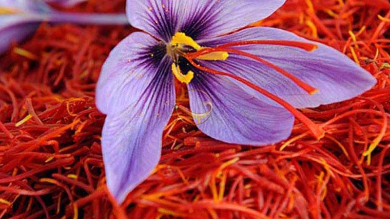 زعفران، مهمترین سوغات مشهد