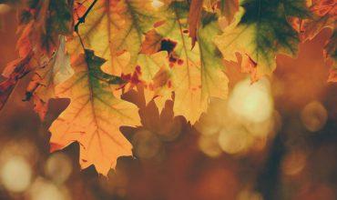 جاهای دیدنی مشهد در پاییز