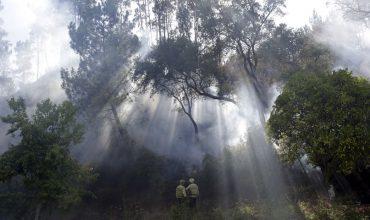 جنگل جیغ مشهد